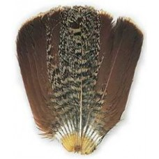English partridge - complete tail