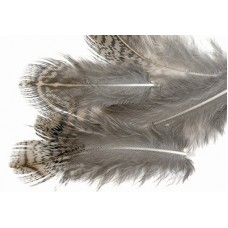 English Partridge - Grey neck hackles dyed