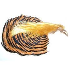 Golden Pheasant Complete Head No. 1 Quality