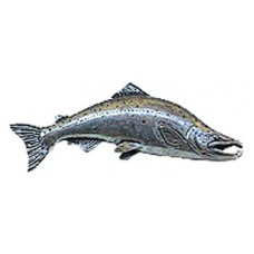 Pewter Pin - Large pacific salmon